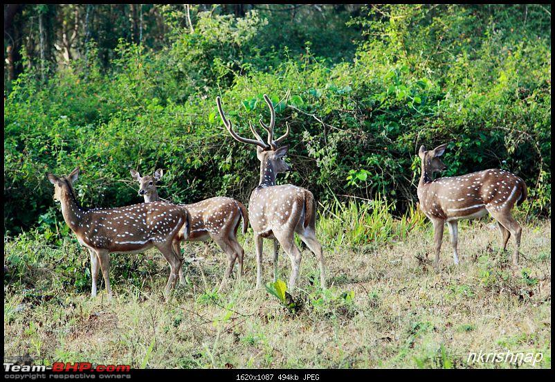 A quick dash to the Lap of Nature (Nagarhole)-img_4109.jpg