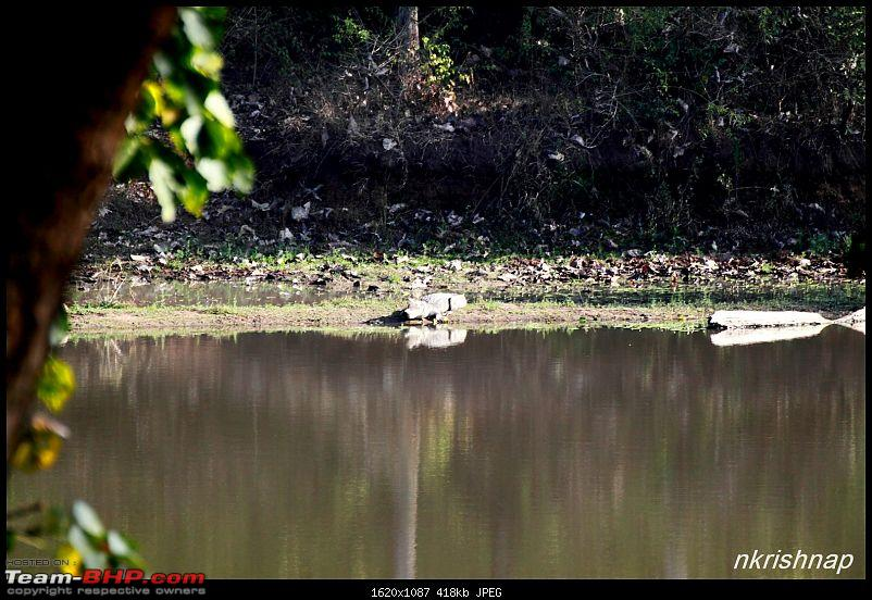 A quick dash to the Lap of Nature (Nagarhole)-img_4147.jpg