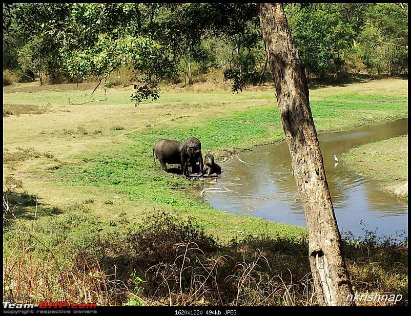A quick dash to the Lap of Nature (Nagarhole)-elephants.jpg