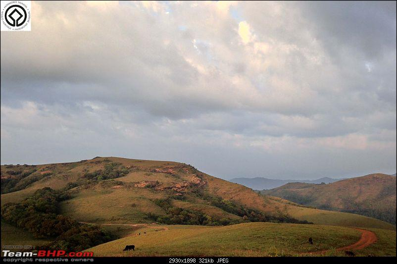 Horse-Face: The Jewel of Western Ghats-img_3334.jpg