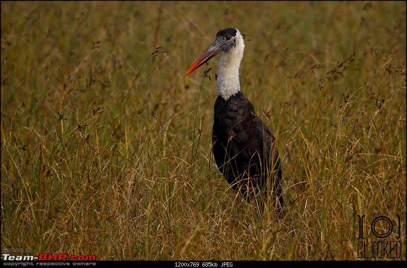 Birds in Sultanpur bird sanctuary-img_3905_1.jpg