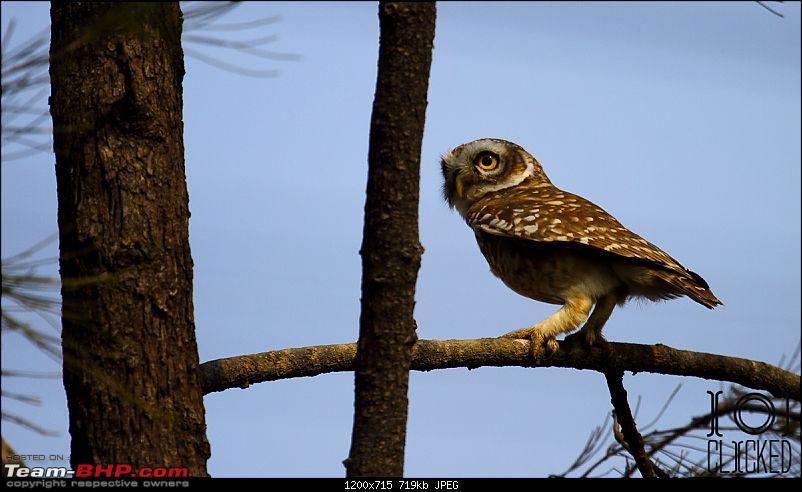 Birds in Sultanpur bird sanctuary-img_4123_1.jpg