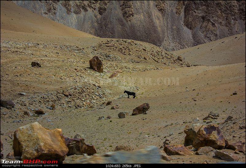 The Yayawar Group wanders in Ladakh & Spiti-10.85.jpg