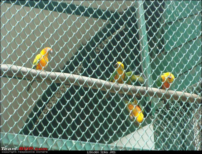 Bannerghatta: Jeep Safari & National Park-sun-conure-parrot_1280x960.jpg