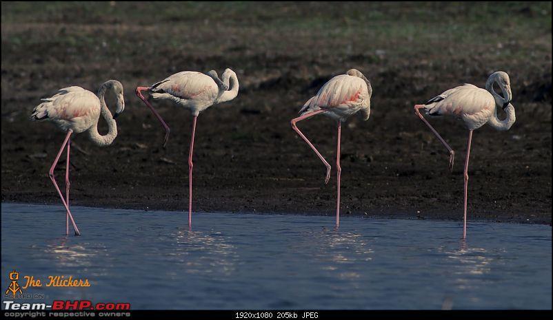 Birding at its best. EDIT: December 2015 updates!-img_8039.jpg