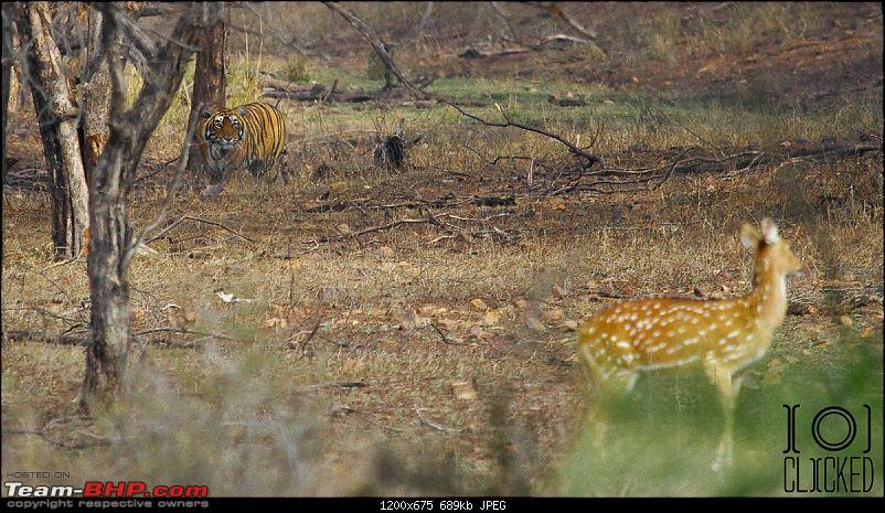 Ranthambhore National Park - Tigers and More!-img_4456_1.jpg