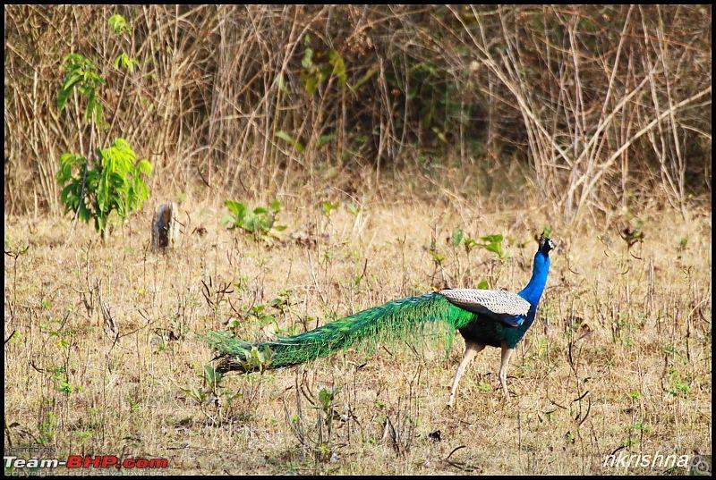 A Retreat to Wilderness: Wayanad-img_4408.jpg