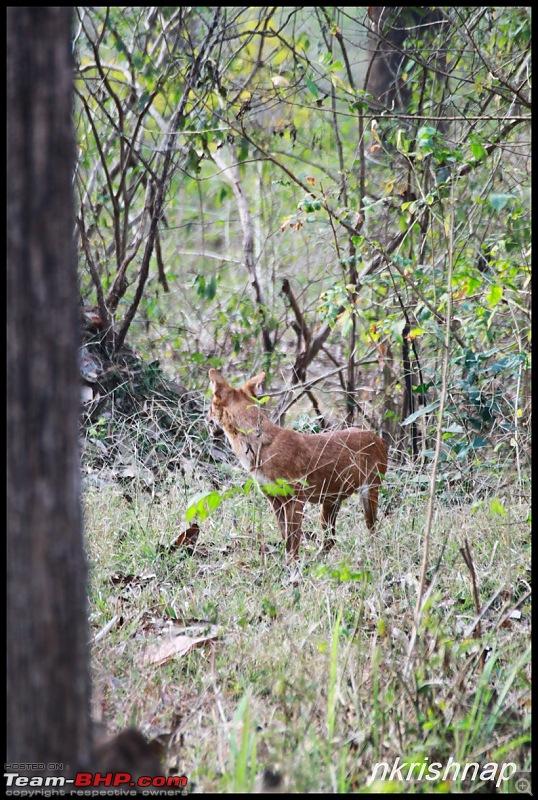 A Retreat to Wilderness: Wayanad-img_4430.jpg
