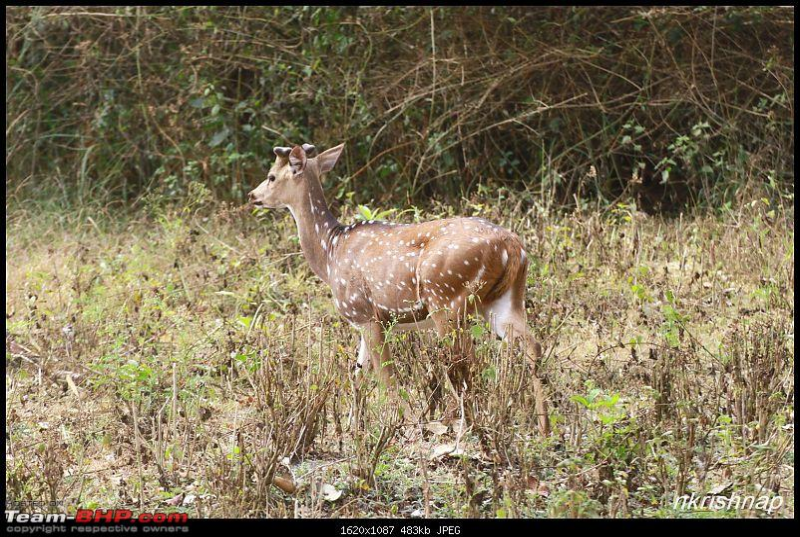 A Retreat to Wilderness: Wayanad-img_4447.jpg