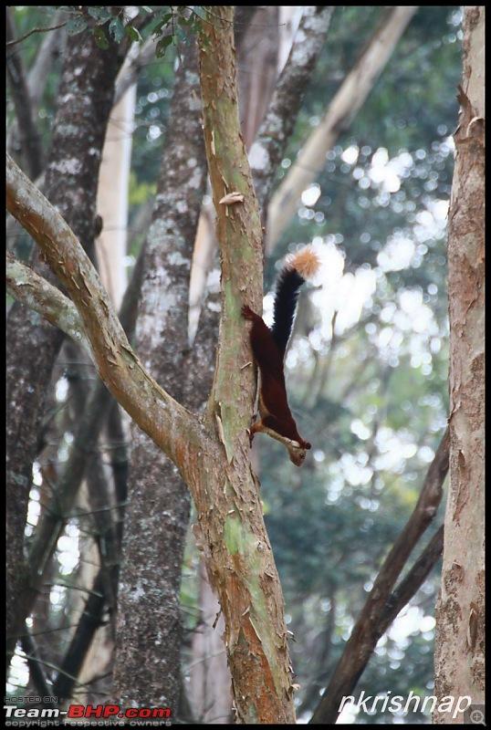 A Retreat to Wilderness: Wayanad-img_4483.jpg