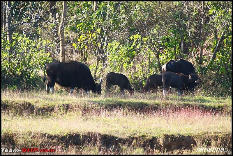 A Retreat to Wilderness: Wayanad-img_4564.jpg