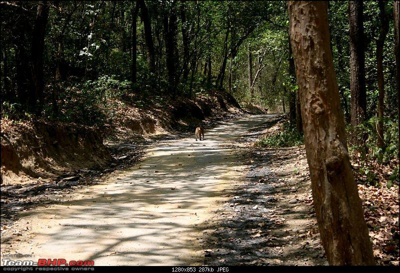 Spectacular Corbett - 3 Tigers in 24 hours!!!-img_0086.jpg