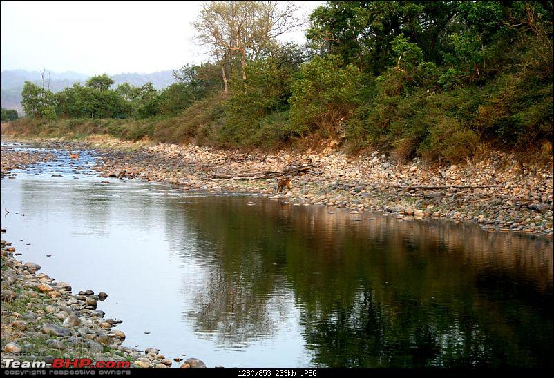 Spectacular Corbett - 3 Tigers in 24 hours!!!-img_0180.jpg