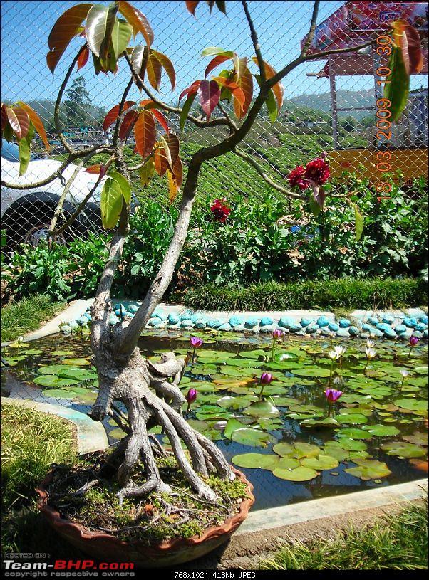 Palio: Pune-Mysore-Kodaikanal-Munnar-Banglore-Pune-garden1.jpg