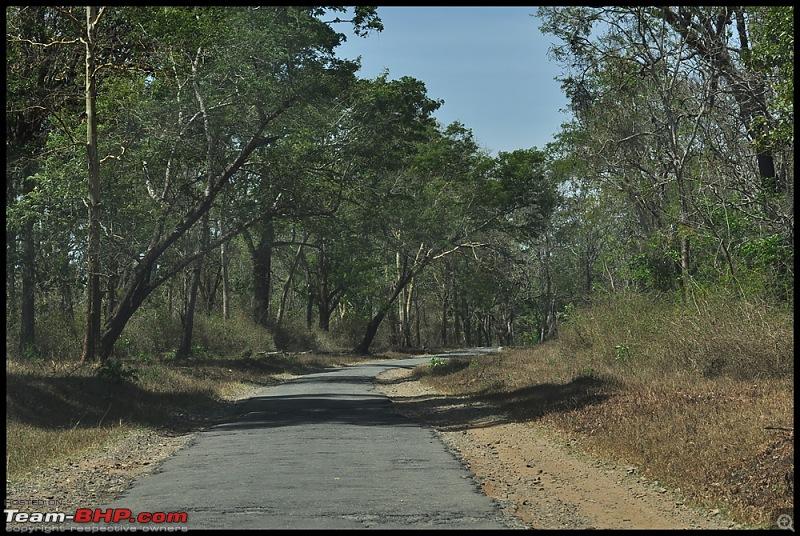 Bangalore - Thirunelli - Bandipur Trip : Forests & Fire-dsc_0055.jpg