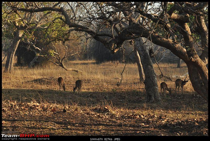 Bangalore - Thirunelli - Bandipur Trip : Forests & Fire-dsc_0873.jpg