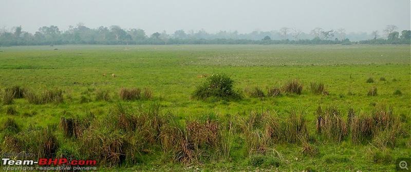 Photo-Tour: Kaziranga National Park & Hoollongapar Gibbon Sanctuary (Assam)-dscf3996.jpg