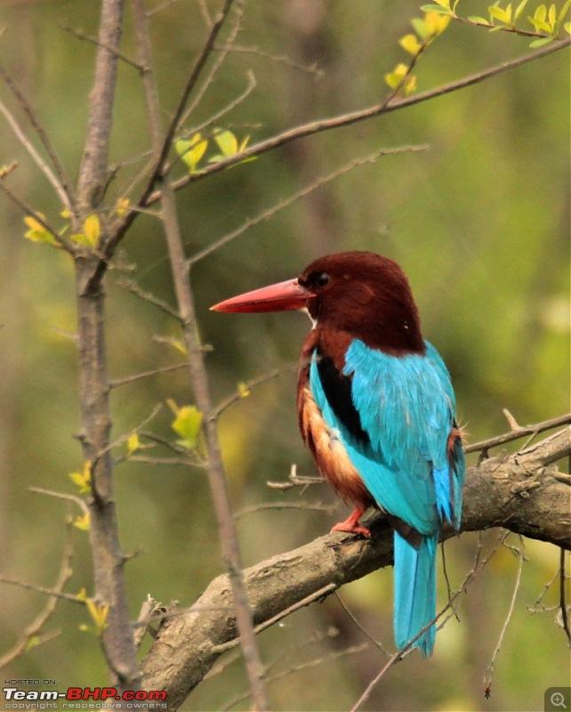 Photo-Tour: Kaziranga National Park & Hoollongapar Gibbon Sanctuary (Assam)-img_3154.jpg