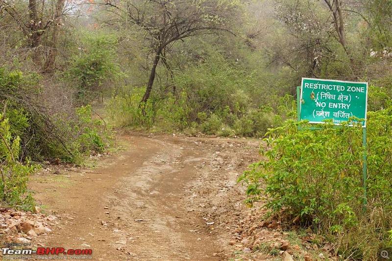 Hawk-On-Fours® (H-4®) Roadtrip: Of Forests (Sariska) & History (Siliserh, Deeg, Agra)-sariska-morning-11.jpg
