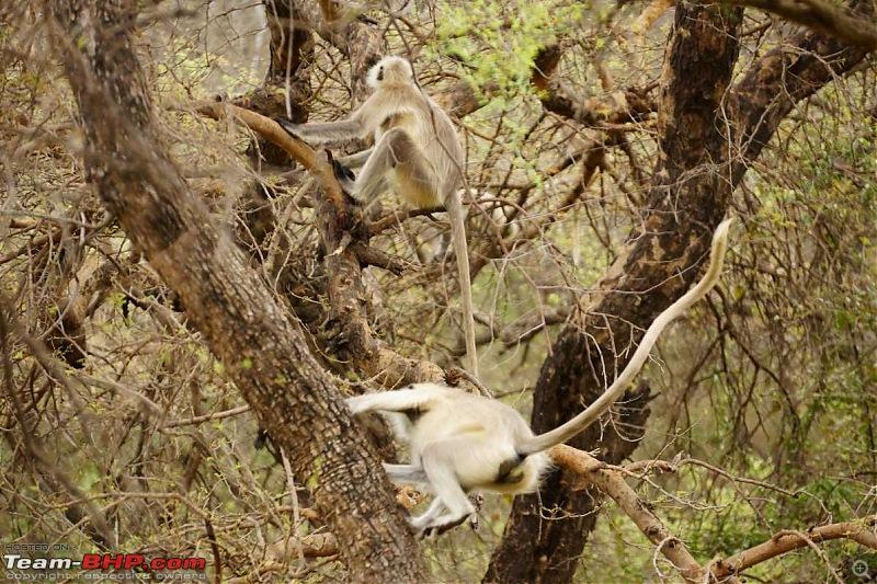 Hawk-On-Fours® (H-4®) Roadtrip: Of Forests (Sariska) & History (Siliserh, Deeg, Agra)-sariska-morning-13.jpg