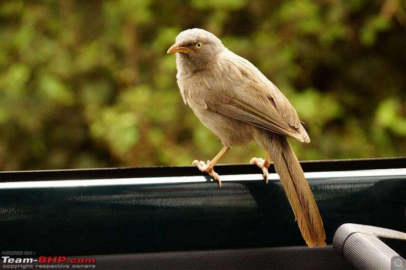 Hawk-On-Fours® (H-4®) Roadtrip: Of Forests (Sariska) & History (Siliserh, Deeg, Agra)-sariska-morning1-1.jpg