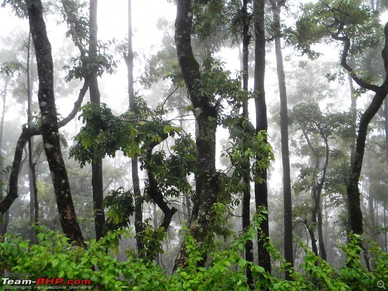 Quick trip to Mullayanagiri, Chickmagalur-dscn2613.jpg