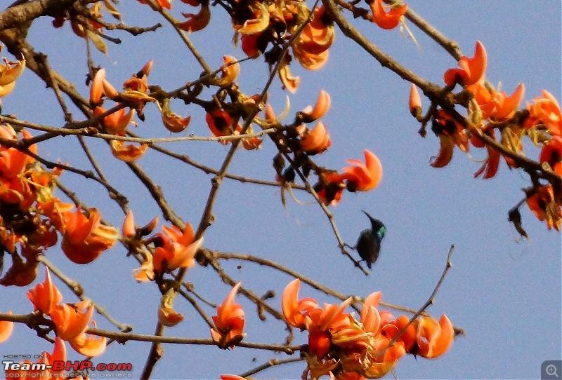 Hawk-On-Fours® (H-4®) Roadtrip: Of Forests (Sariska) & History (Siliserh, Deeg, Agra)-sariska-9.jpg