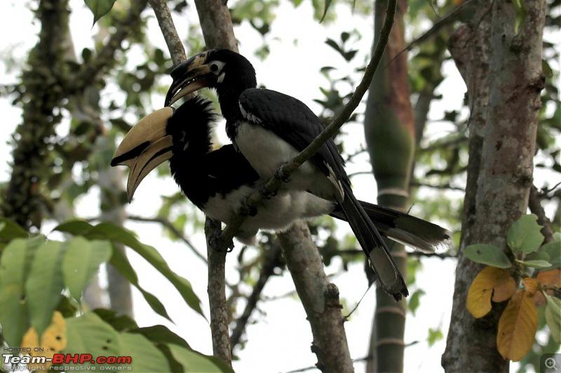 Photo-Tour: Kaziranga National Park & Hoollongapar Gibbon Sanctuary (Assam)-img_4145.jpg