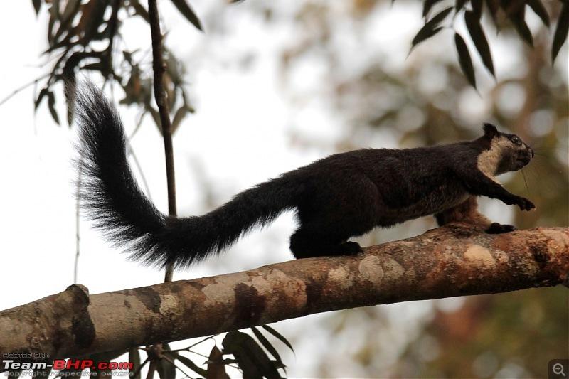 Photo-Tour: Kaziranga National Park & Hoollongapar Gibbon Sanctuary (Assam)-img_5322.jpg