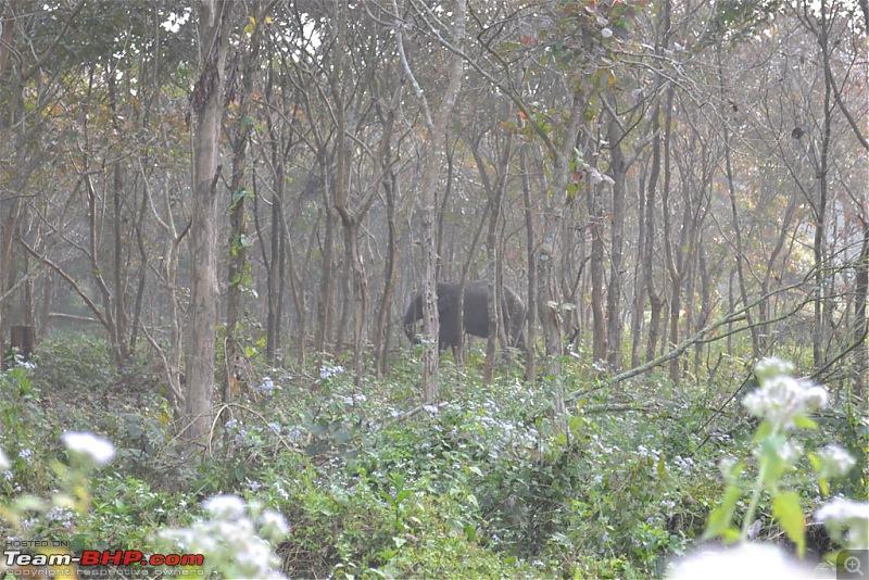 Dooars and Darjeeling from Asansol-dsc_0548.jpg