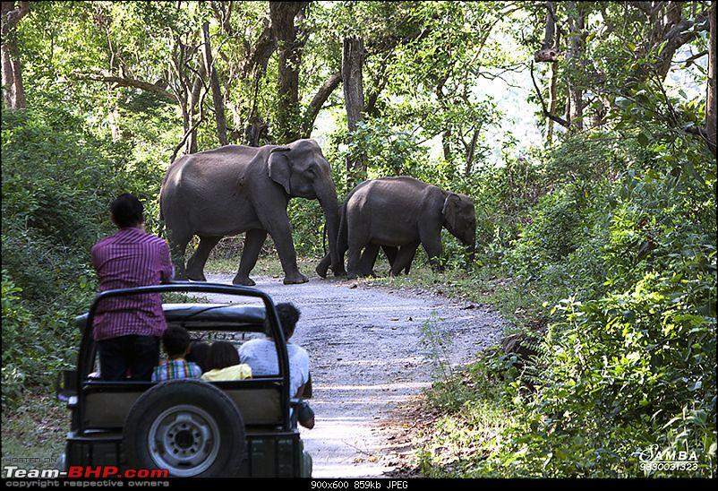 Corbett Tiger Reserve & Agra: Two consecutive weekends from Delhi!-img_2256.jpg