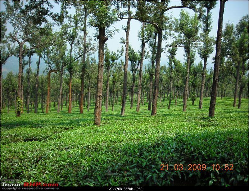 Palio: Pune-Mysore-Kodaikanal-Munnar-Banglore-Pune-dscn3318.jpg