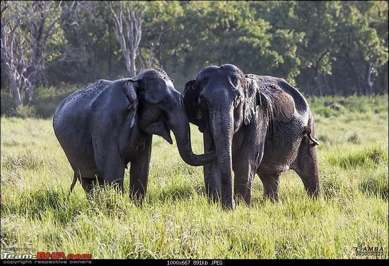 Corbett Tiger Reserve & Agra: Two consecutive weekends from Delhi!-img_2288.jpg