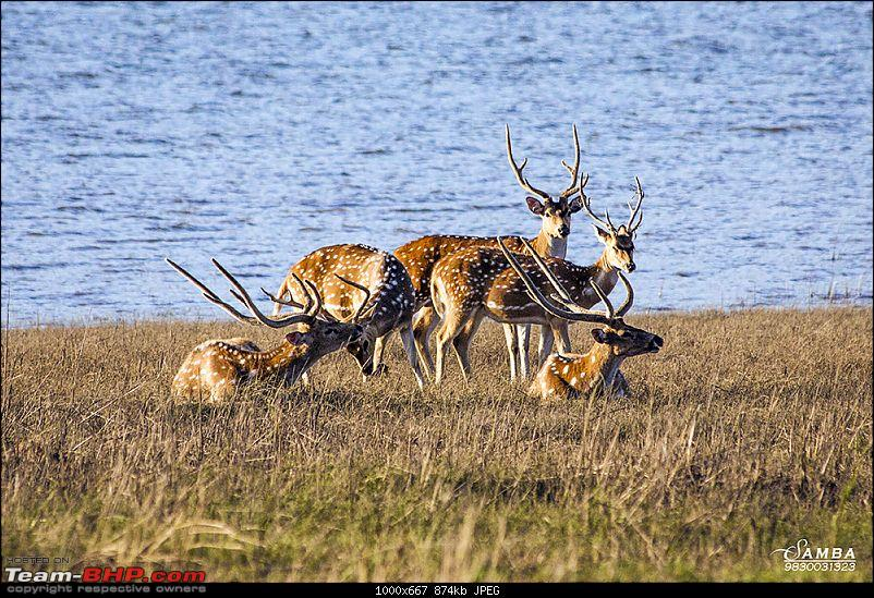 Corbett Tiger Reserve & Agra: Two consecutive weekends from Delhi!-img_2300.jpg