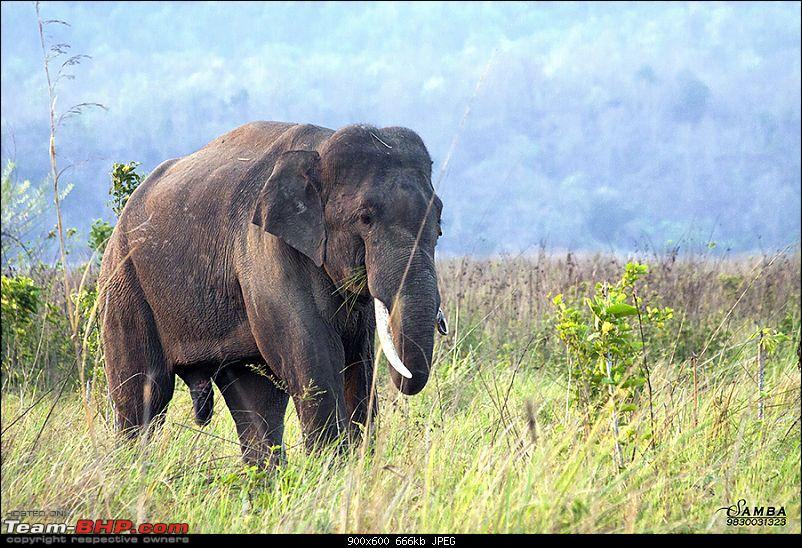 Corbett Tiger Reserve & Agra: Two consecutive weekends from Delhi!-img_2355.jpg