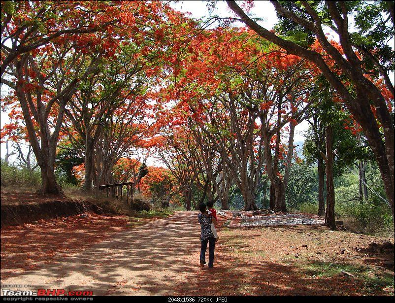 Ooty reclaimed- Good Friday weekend 2009.-03-gulmohar-lane.jpg