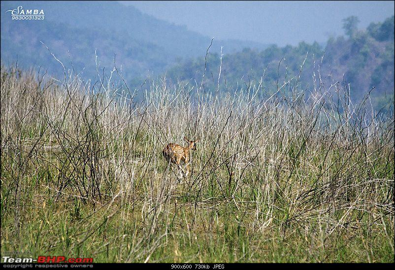 Corbett Tiger Reserve & Agra: Two consecutive weekends from Delhi!-img_2517.jpg