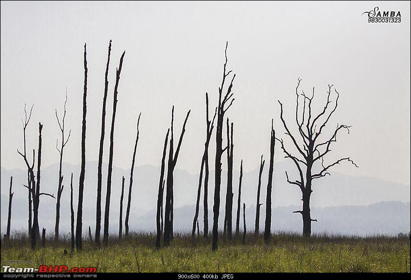 Corbett Tiger Reserve & Agra: Two consecutive weekends from Delhi!-img_2635.jpg