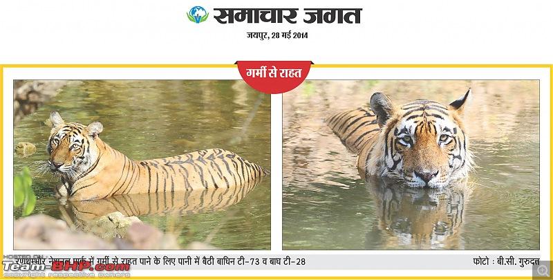 Gurgaon - Ranthambhore - Jodhpur - Gurgaon: Big Cats call again..!-28may2014.jpg