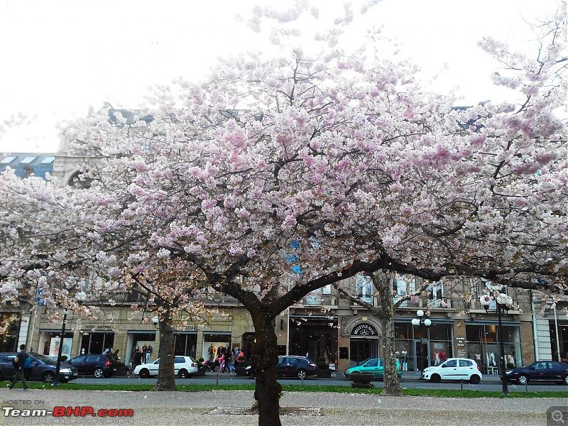 Living in Germany-spring-3.jpg