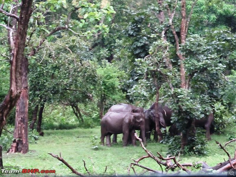 Call of the Jungle � Kabini-elephants.jpg