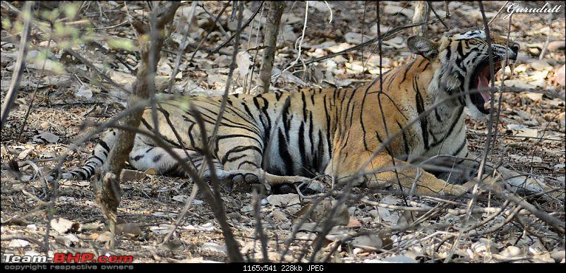 Gurgaon - Ranthambhore - Jodhpur - Gurgaon: Big Cats call again..!-0480.jpg