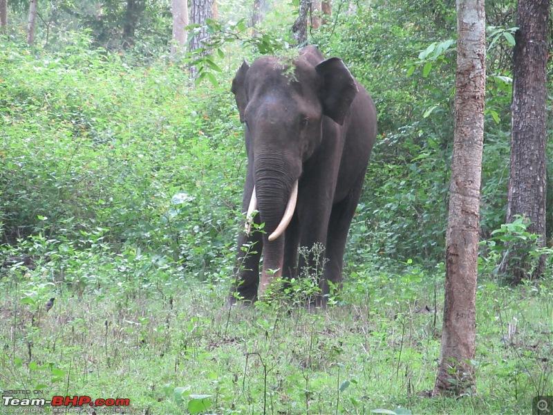 Call of the Jungle – Kabini-elephant.jpg