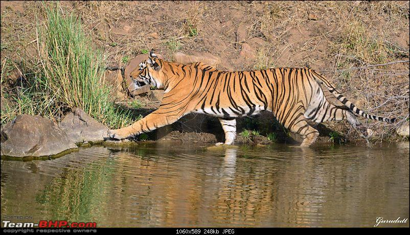 Gurgaon - Ranthambhore - Jodhpur - Gurgaon: Big Cats call again..!-4024.jpg