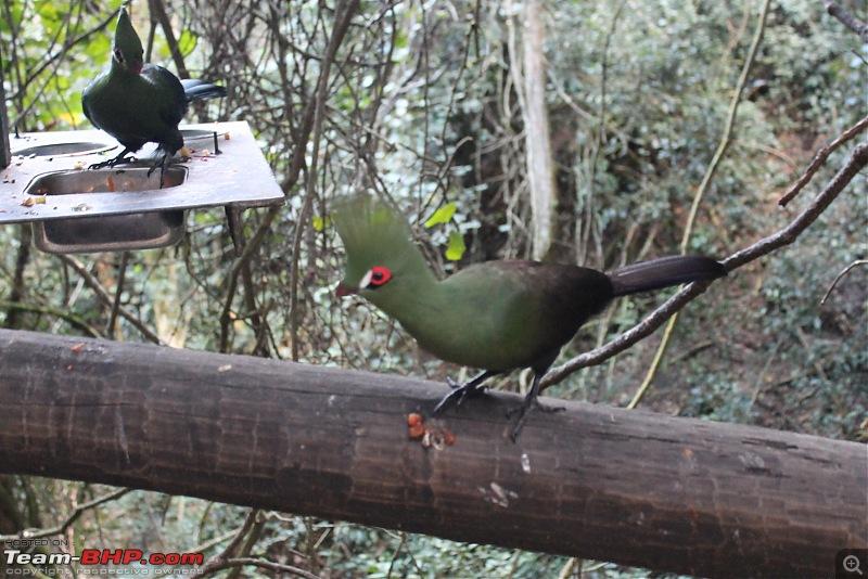 Splendid South Africa-birds-eden-4.jpg