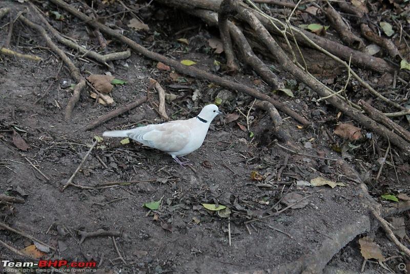 Splendid South Africa-birds-eden-6.jpg
