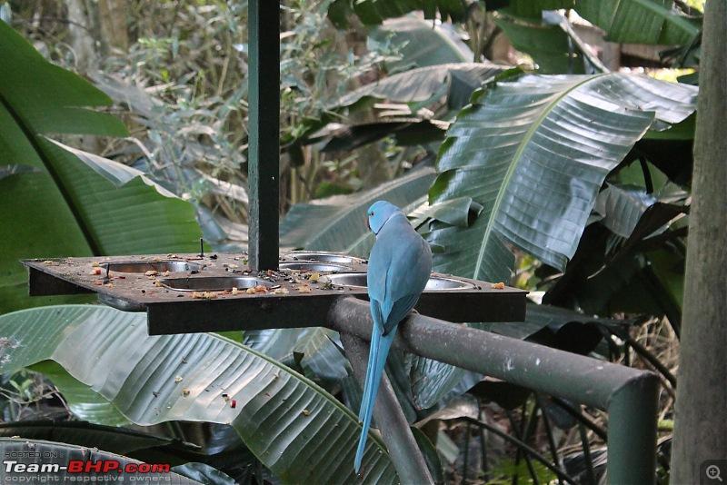 Splendid South Africa-birds-eden-8.jpg