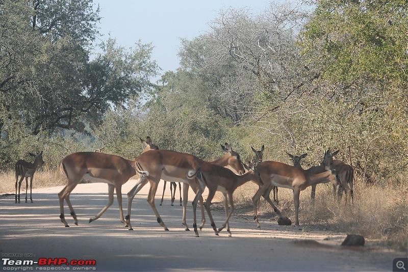 Splendid South Africa-kruger-deer-herd.jpg