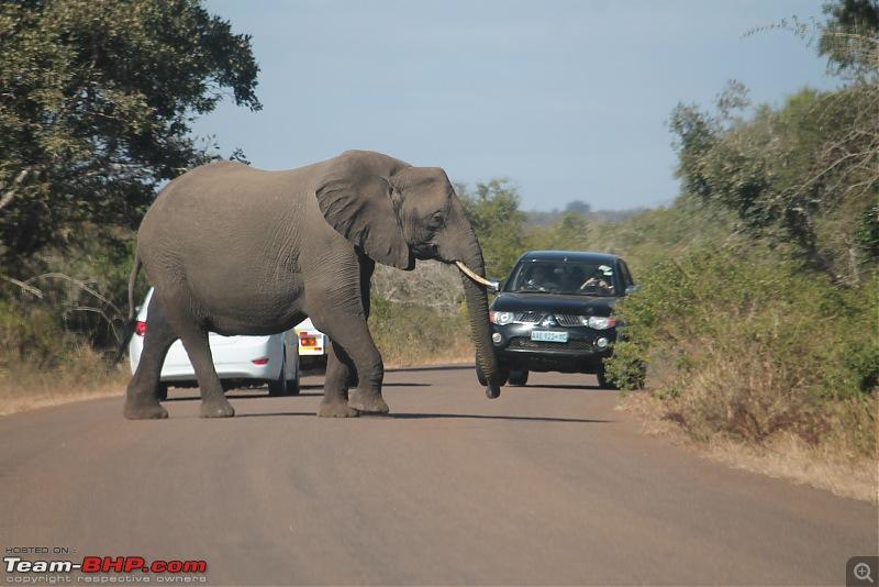 Splendid South Africa-kruger-elephant-4.jpg