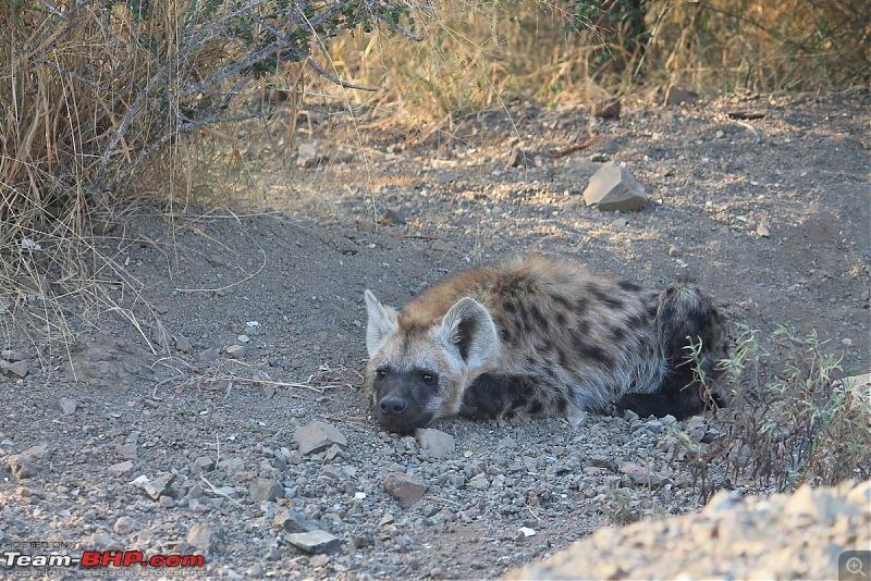 Splendid South Africa-kruger-hyena-2.jpg